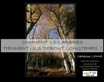2015-03-07-arbres-sebout-pulp.jpg
