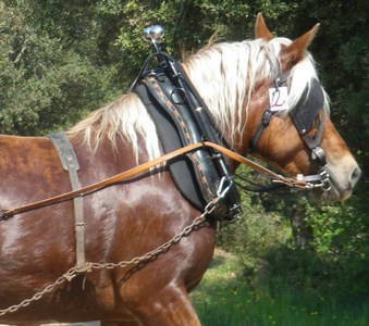 2016-08-28-chevaux-st-jeures-retournac.jpg