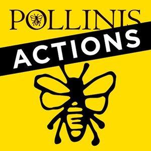 2017-01-05-bulletin-infos-pollinis.jpg