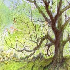 2019-07-14-exposition-arbre-girond.jpg