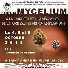 2019-10-04-06-forum-champignons.jpg