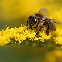 2021-06-12-balade-mezenc-pollen.jpg
