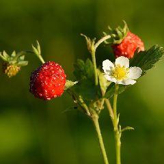 2021-07-17-sortie-nature-plantes.jpg